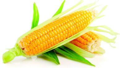 Сколько варить кукурузу