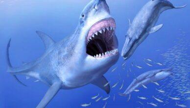 Зуб доисторической акулы