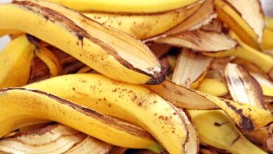 Подкормка из банановой кожуры для рассады и комнатных цветов
