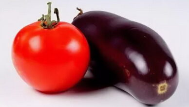 5 советов для получения стабильного урожая томатов и баклажанов