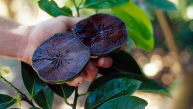 Сапота — чёрный фрукт со вкусом шоколада