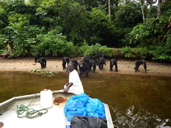обезьяны африки