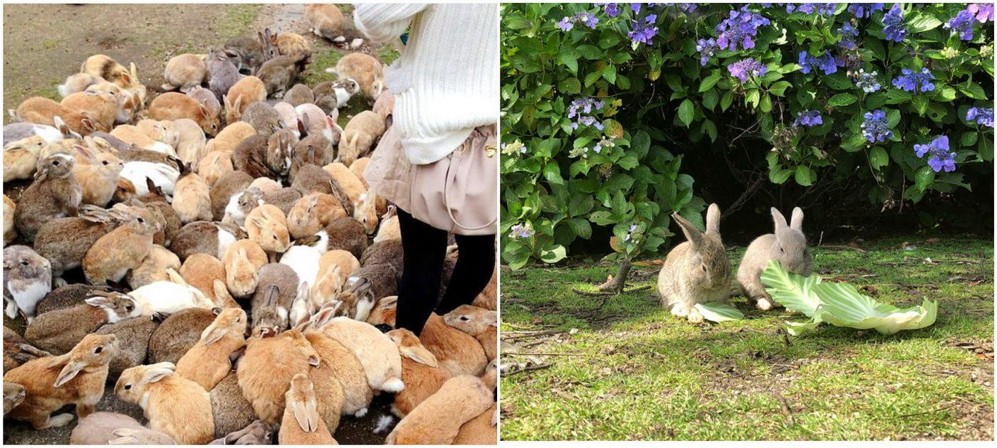 Кролики на Окуносиме