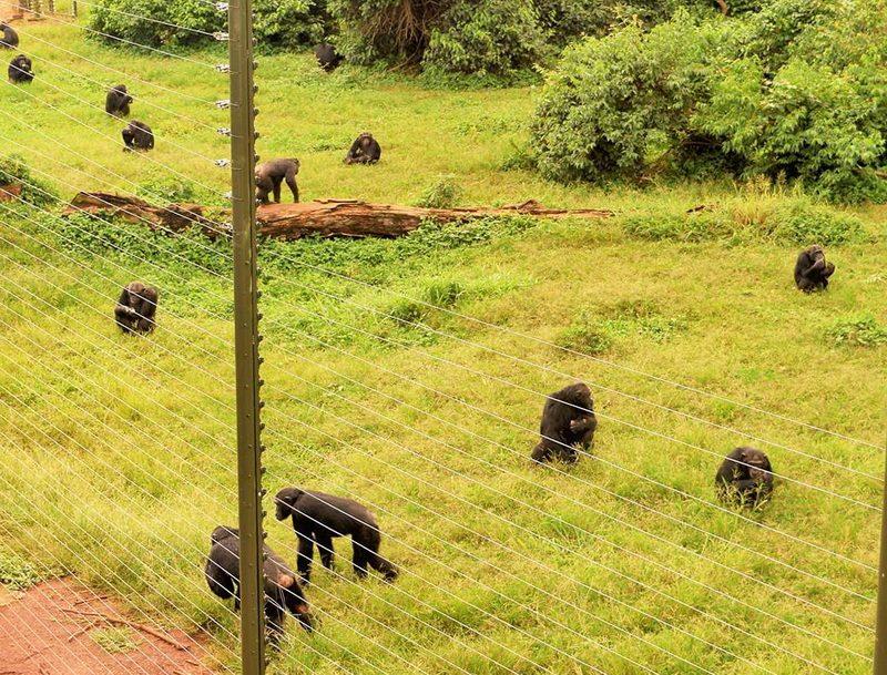 остров шимпанзе, либерия