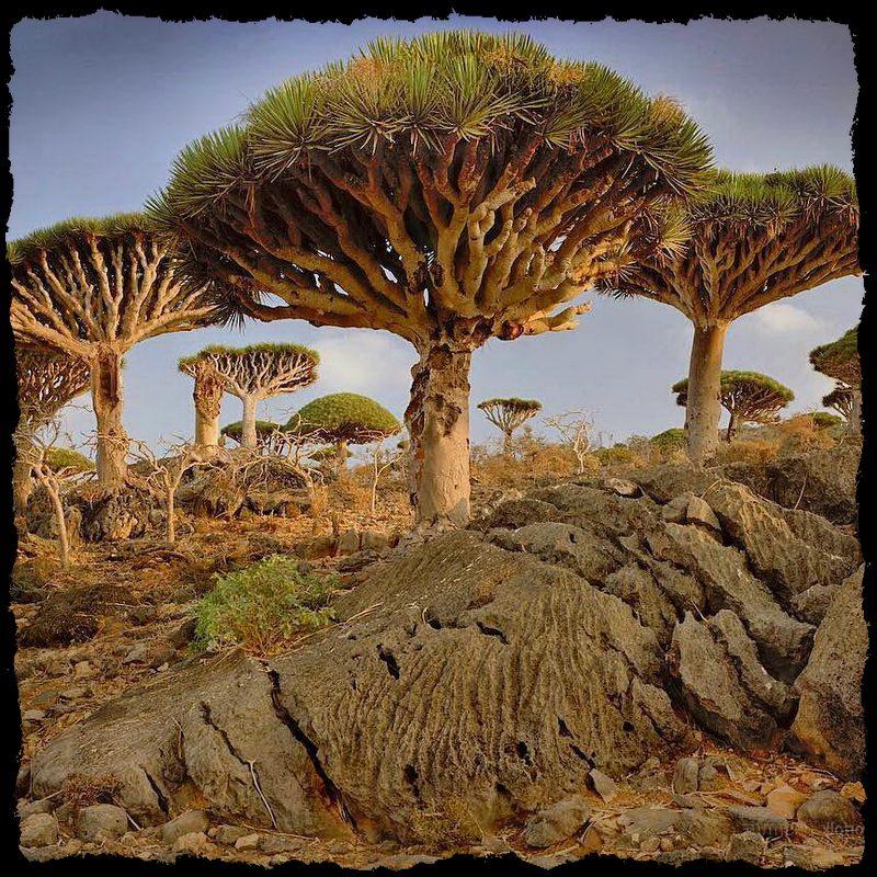 Удивительные Деревья планеты