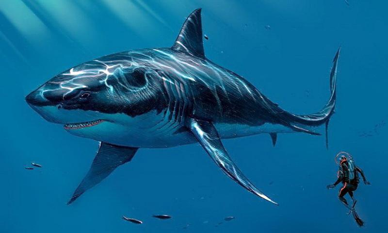 Житель Северной Каролины нашел на пляже зуб доисторической акулы