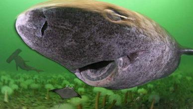 Живые акулы и скат внутри активного подводного вулкана