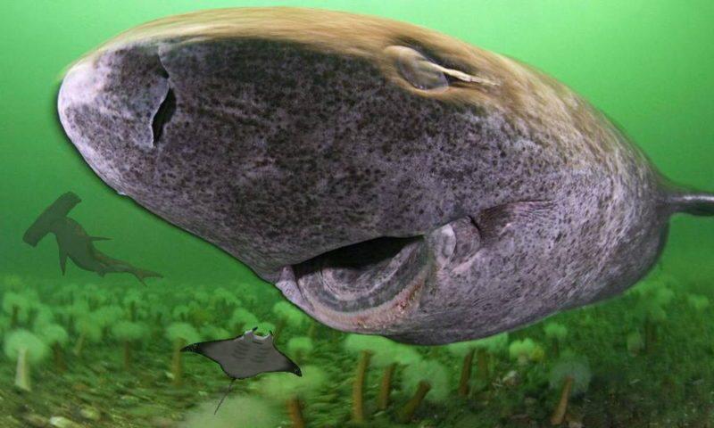 Живые акулы и скат обнаружены внутри активного подводного вулкана