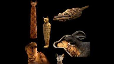 Почему мумии животных были неотъемлемой частью Древнего Египта