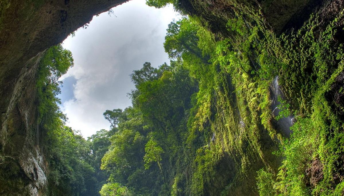 Чудо природы Шондонг — затерянный лес в самой большой пещере мира