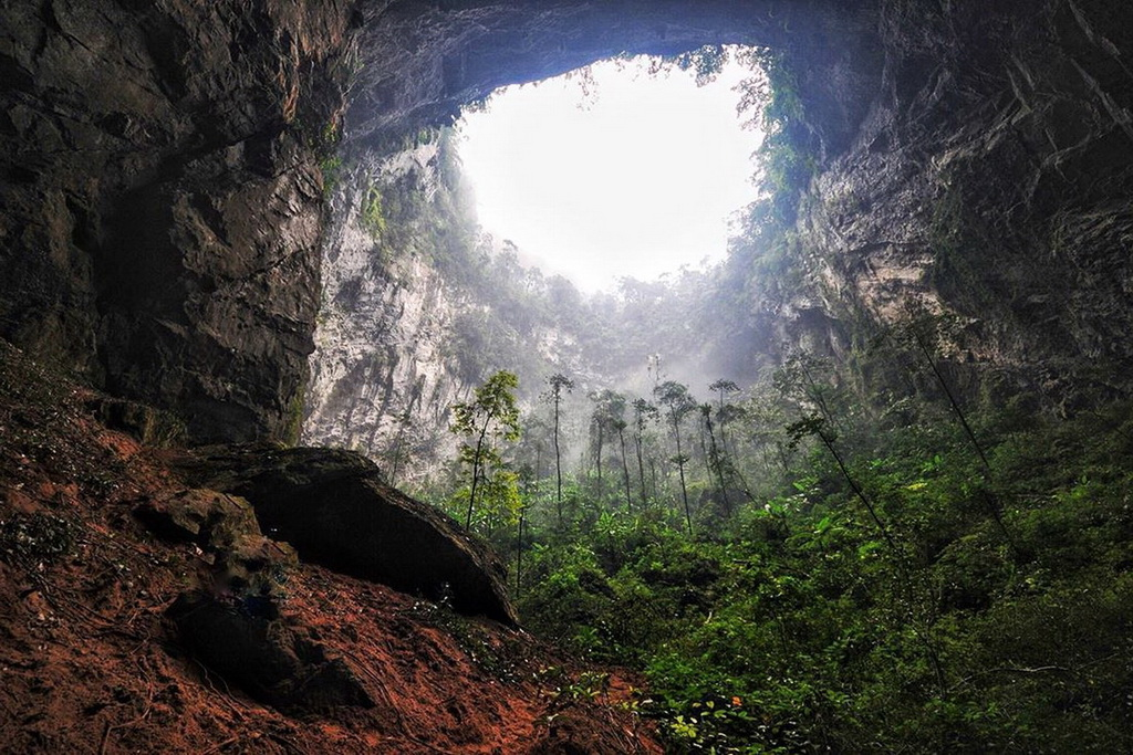 Скрытый лес в пещере Шондонг