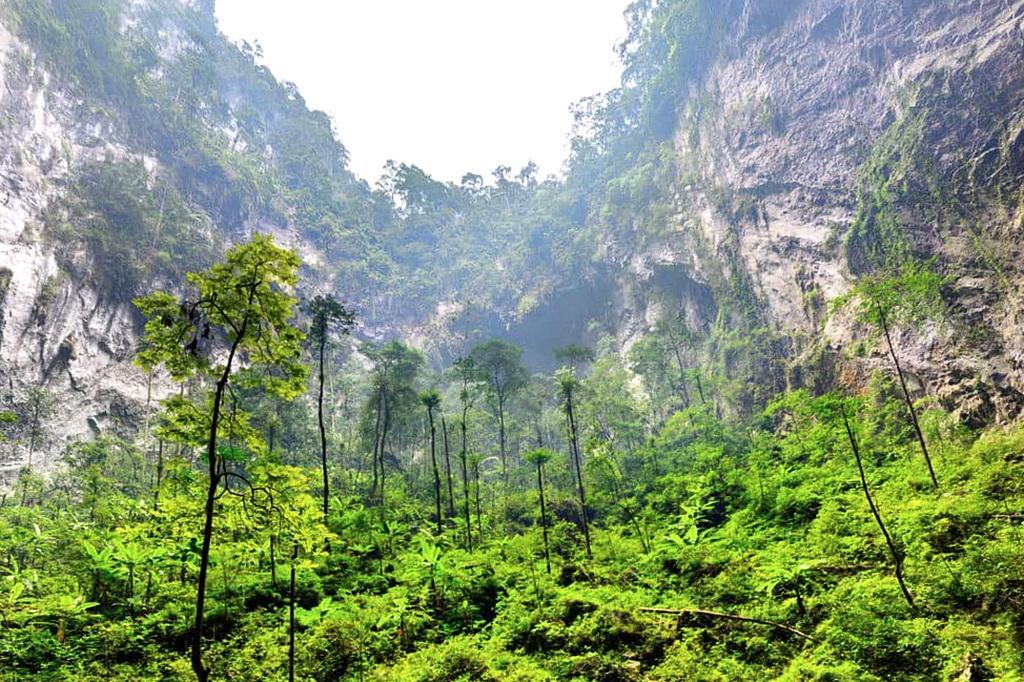 Тропический лес в пещере