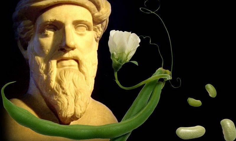 Почему Пифагор и его последователи не ели фасоль