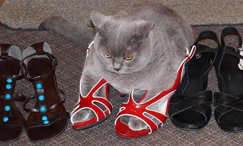 Кот пометил обувь: как избавиться от запаха