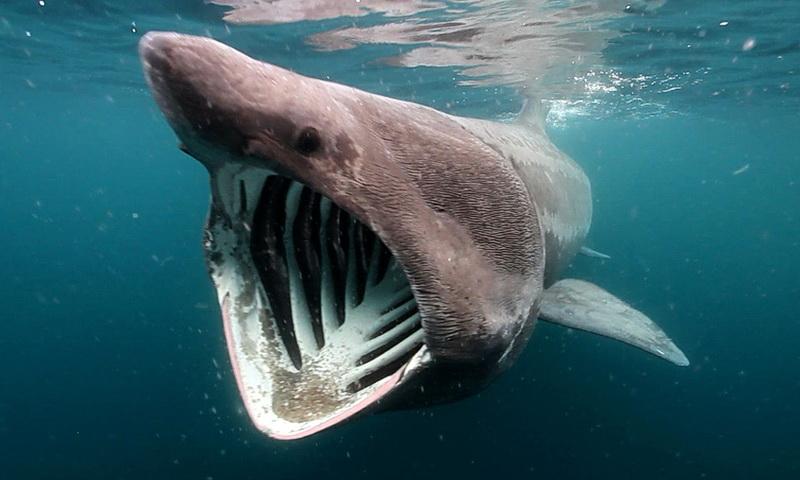 7 самых странных акул, которые действительно существуют