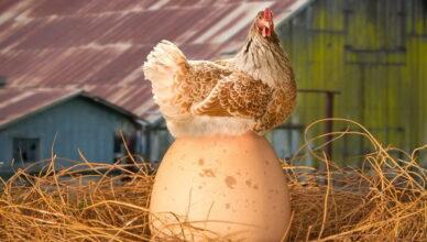 Что было первым курица или яйцо