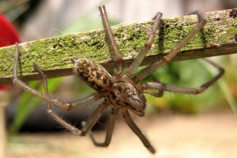Популярные виды пауков проживающих в Краснодарском крае