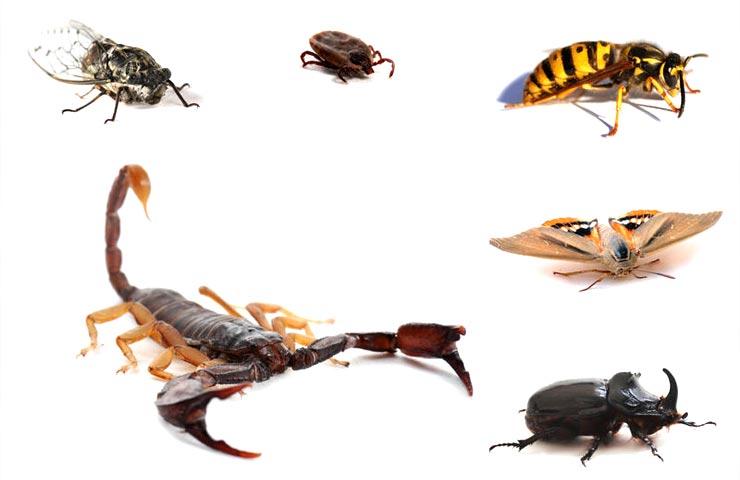 насекомые Краснодарского края