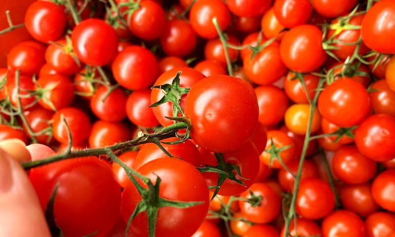 Простые правила хорошего урожая томатов