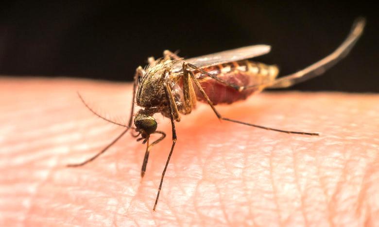Трутовик – лесной аналог спирали от комаров