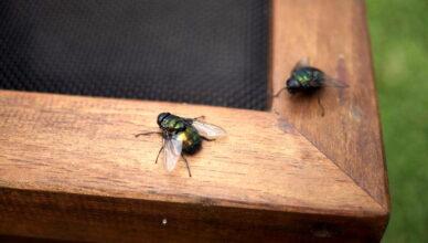 Липучки от мух своими руками или как избавиться от назойливых насекомых