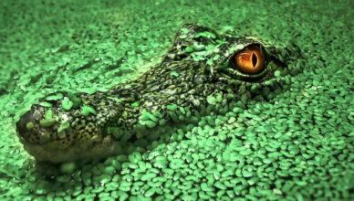 Исследование древних крокодилов показало, что некоторые рептилии были веганами