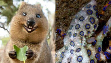 5 милых против пятерки самых опасных животных Австралии