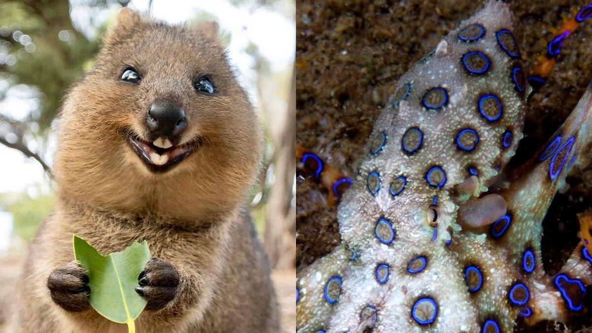 5 милых животных против пятерки самых опасных существ Австралии