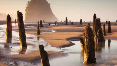 Призрачный лес на пляже штата Оригон