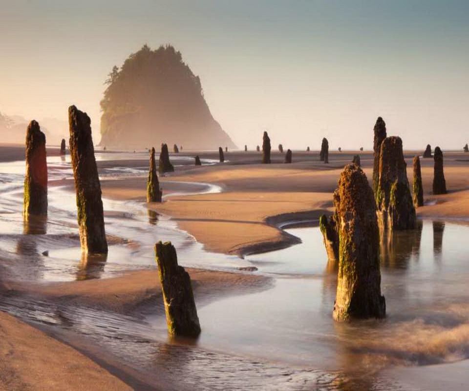 Призрачный лес на пляже штата Орегон