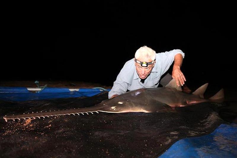 15 реальных существ, пойманных в реках по всему миру