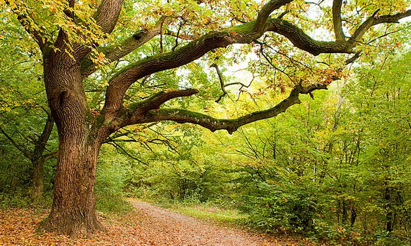 Дендротерапия: какое дерево вам подходит по энергетике