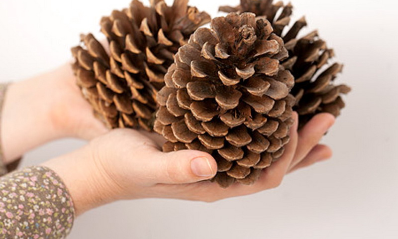 Деревья и животные подскажут, какая будет зима