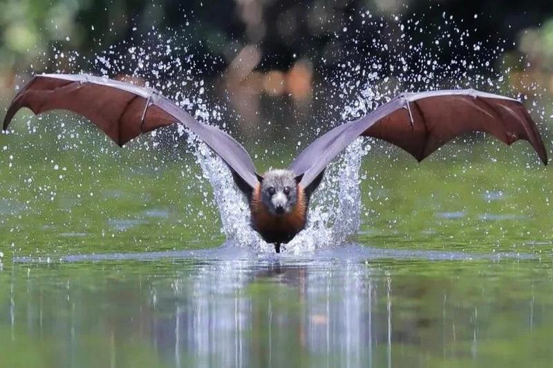 Крылатые существа, с которыми лучше не встречаться