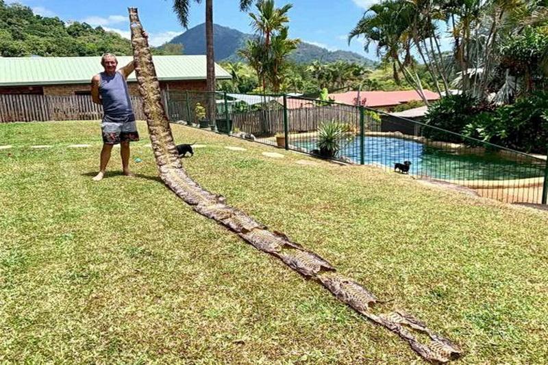 Мужчина из Австралии обнаружил шкуру 7-метровой змеи
