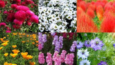 Цветы, которые можно и нужно сеять под зиму