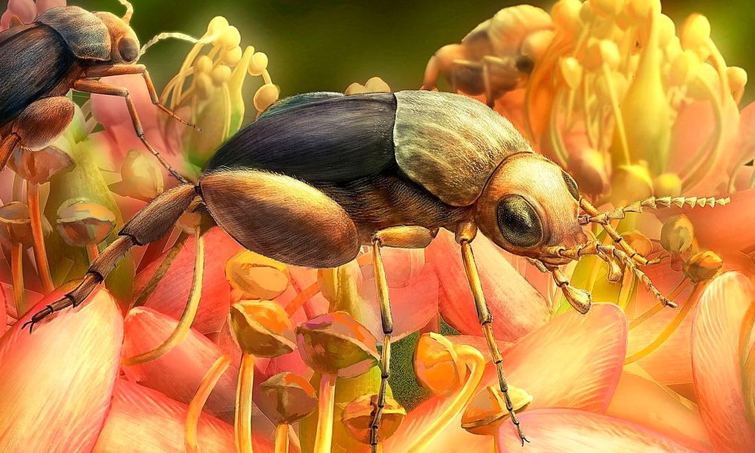 Древний жук показал, когда впервые появились цветы