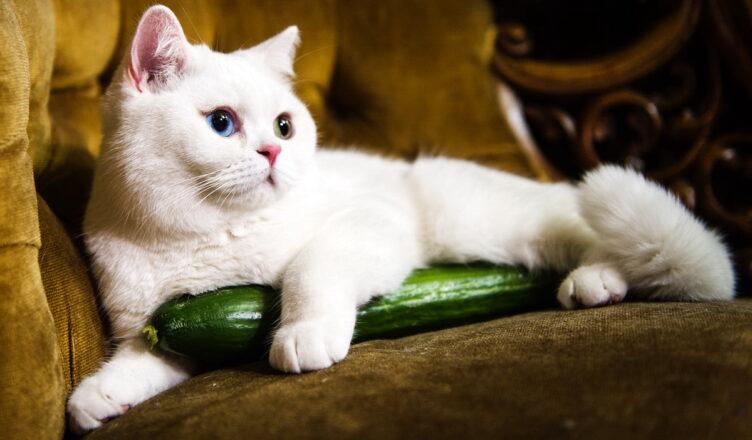 Коты против огурцов: почему кошки их боятся