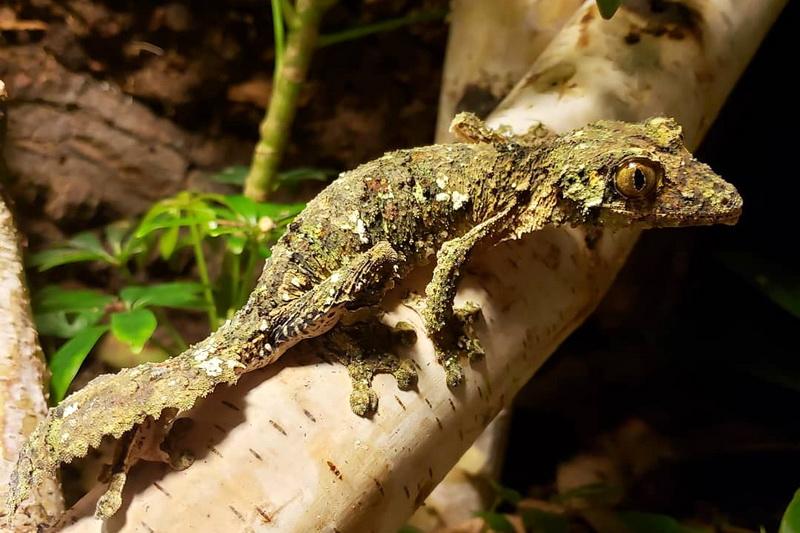 «Каменный лес» Цинги-де-Бемараха на Мадагаскаре и его редкие животные
