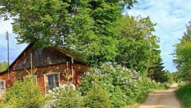 5 деревьев-оберегов, которые наши предки всегда сажали возле своих домов