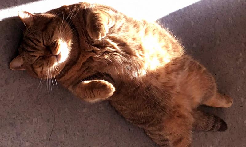 Можно ли котам давать валерьянку и почему они ее любят