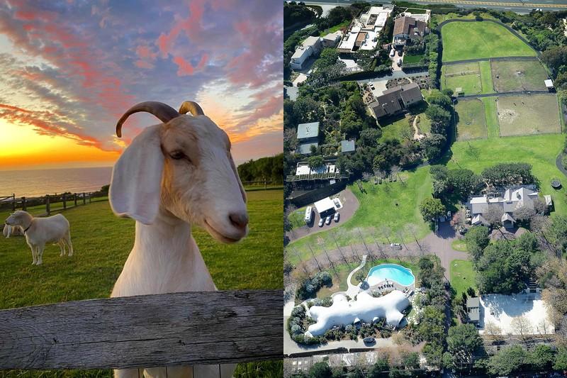 Роберт Дауни-младший превратил поместье в Малибу в настоящий зоопарк
