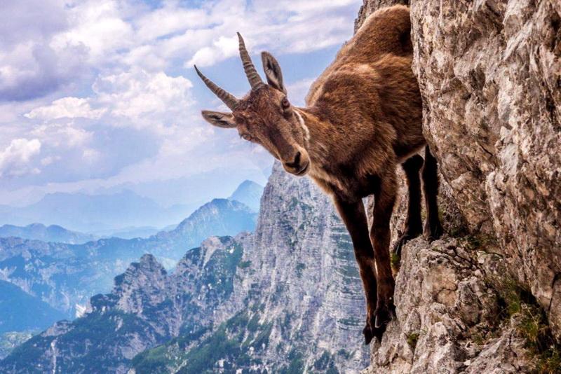 Животные с невероятными способностями