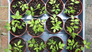 Правильная посадка семян на рассаду в 2020 году: сроки, советы, календарь