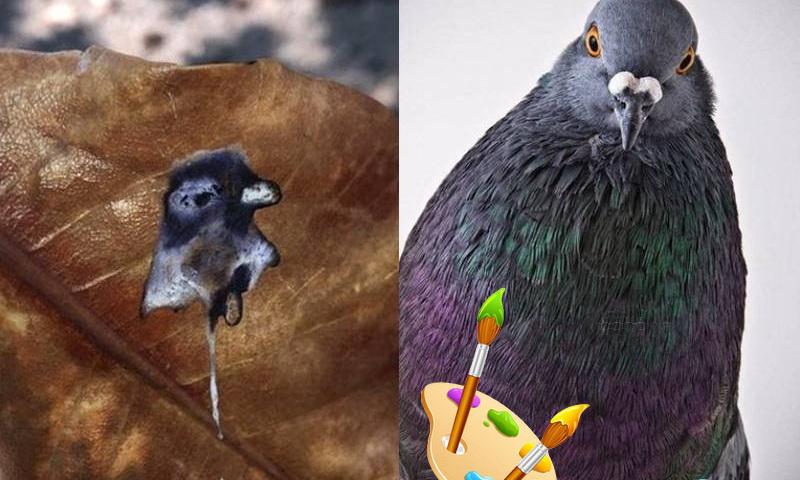 голубь на листе