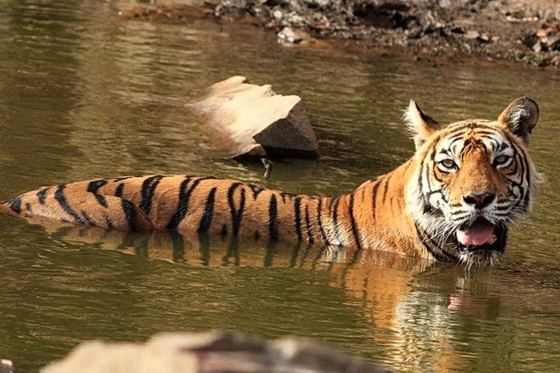 Леди озер Мачни в своих владениях