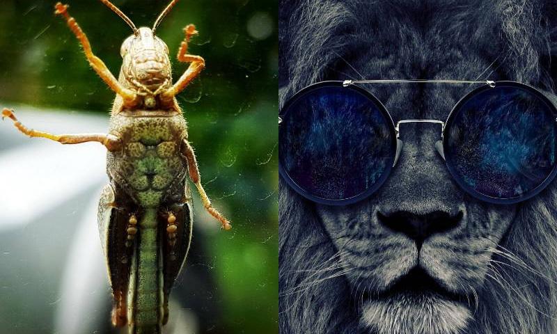 живот кузнечика и лев в очках