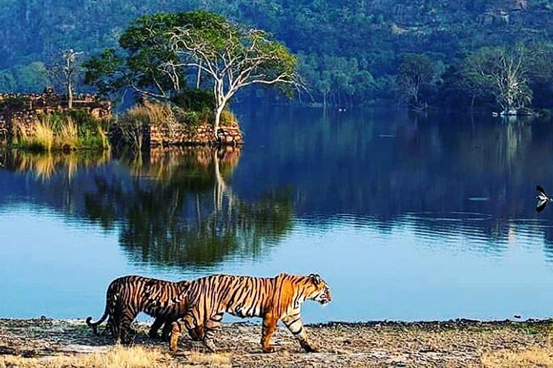 Национальный парк Рантхамбор