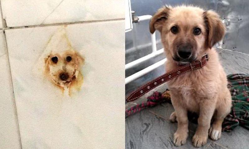 портрет собаки на стене