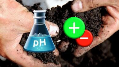 Как самостоятельно определить кислотность почвы на участке